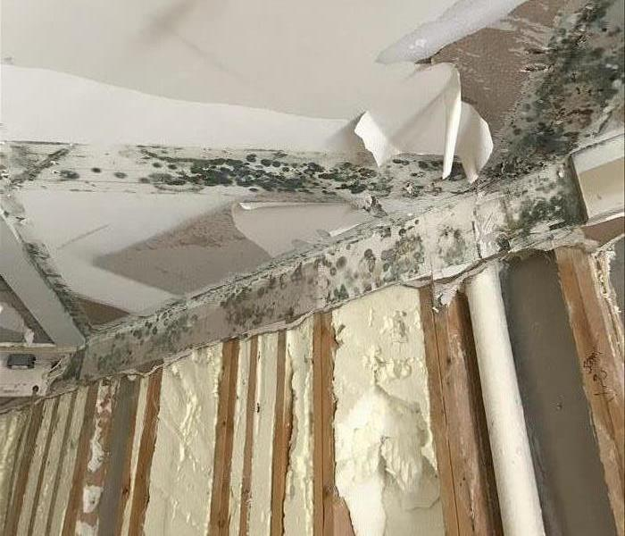 Mold Remediation Don't Let Your Home Be Too Humid This Spring!
