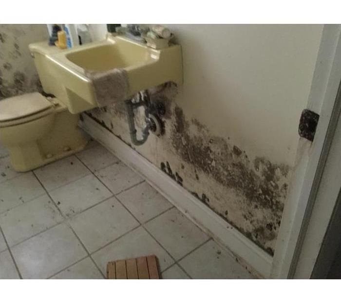 Mold Remediation What to Expect When You Call Us for Mold:
